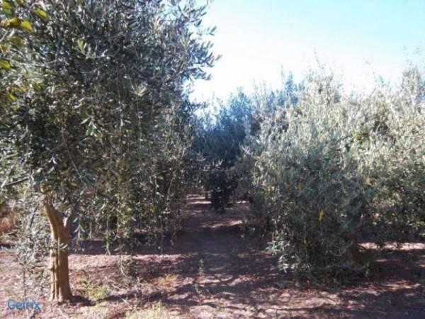 Terreno Agricolo in vendita a Villaputzu, 9999 locali, prezzo € 35.000   CambioCasa.it