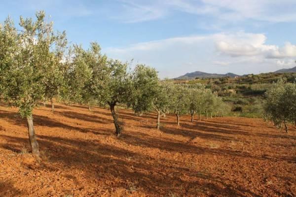 Terreno Agricolo in vendita a Partinico, 9999 locali, prezzo € 150.000   CambioCasa.it