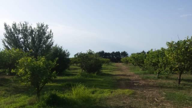 Terreno Agricolo in vendita a Partinico, 9999 locali, Trattative riservate   CambioCasa.it