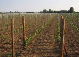 Terreno Agricolo in vendita a Sant'Arpino, 9999 locali, prezzo € 90.000 | CambioCasa.it
