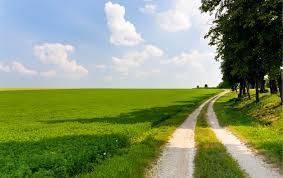 Terreno Agricolo in Vendita a Veggiano