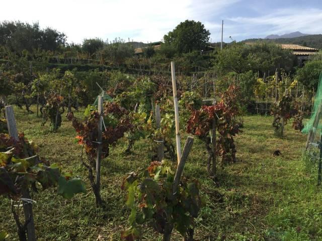 Rustico / Casale in Vendita a Piedimonte Etneo