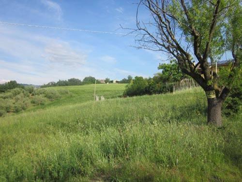 Terreno Agricolo in Vendita a Teramo