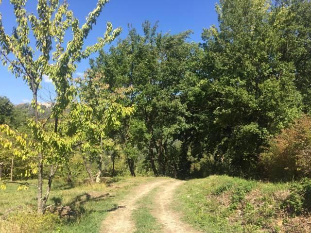 Terreno Edificabile Residenziale in Vendita a Poggio Nativo