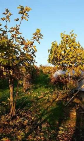 Rustico / Casale in Vendita a Miradolo Terme