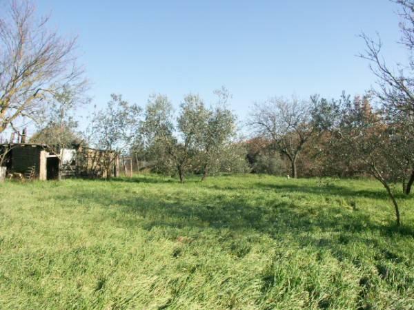 Terreno edificabile in vendita a Porano (TR)