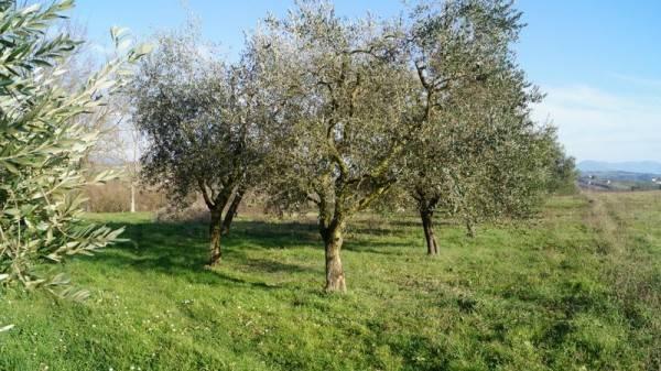 Terreno Agricolo in vendita a Caiazzo, 9999 locali, prezzo € 20.000 | CambioCasa.it