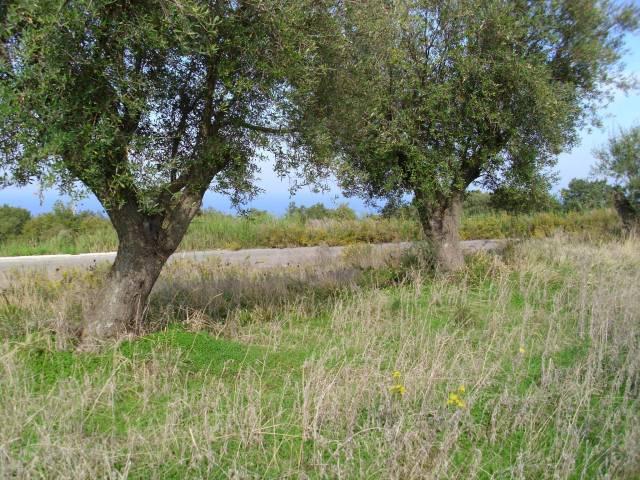In zona molto tranquilla,lontano dal caos estivo vendiamo:1.470mq di terreno edificabile a 5 km dal