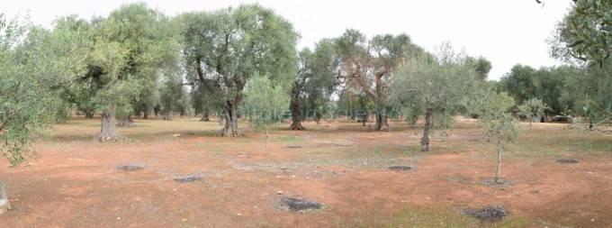 Terreno Agricolo in vendita a Alessano, 9999 locali, prezzo € 8.000 | CambioCasa.it