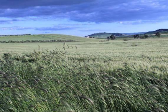 Terreno agricolo in Vendita a Matera Rif.6520286