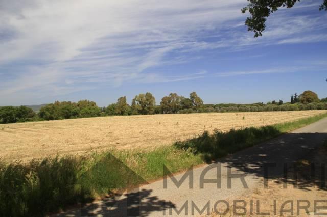 Terreno agricolo con oliveta Rif. 5031011