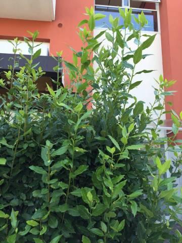 Bilocale Noventa Padovana Via Roma 8