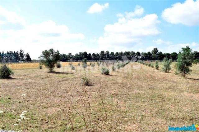 Terreno agricolo Rif. 4193685