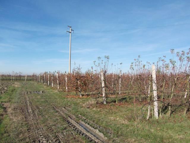 Terreno Agricolo in vendita a Imola, 9999 locali, prezzo € 460.000   CambioCasa.it