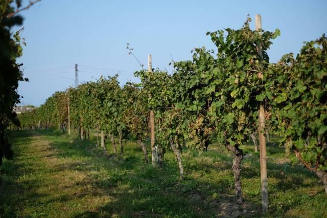 Terreno Agricolo in vendita a Sirmione, 9999 locali, prezzo € 100.000 | Cambio Casa.it