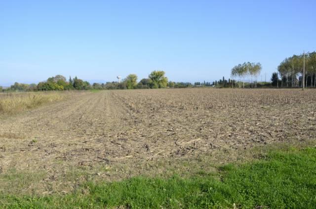 SAN CANZIAN D'ISONZO: TERRENO AGRICOLO