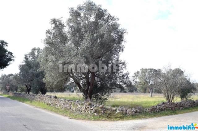 Terreno agricolo Rif. 4193692