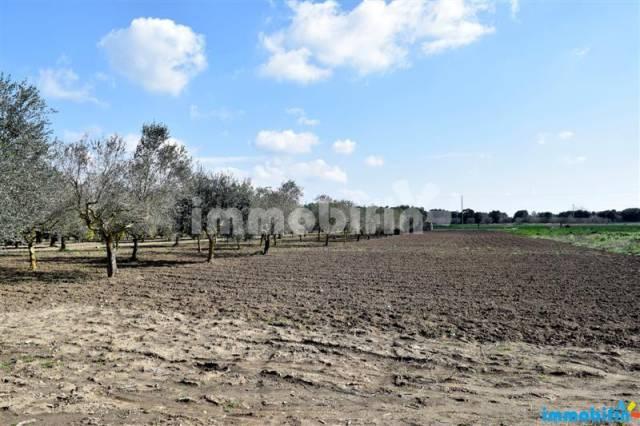 Terreno agricolo a 3 km dal centro abitato Rif. 4193698
