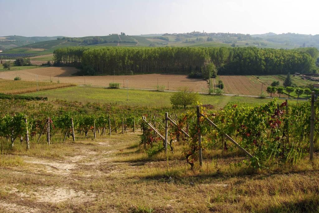 Terreno Edificabile Artigianale a Mombaruzzo in Vendita