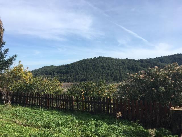 Ampio terreno con piante di ulivo e un rudere Rif. 5076039