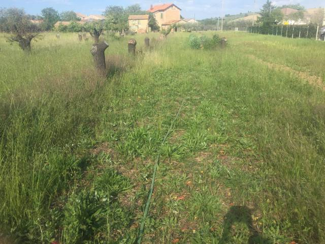 Terreno Agricolo in vendita a Morciano di Romagna, 9999 locali, prezzo € 53.000 | Cambio Casa.it