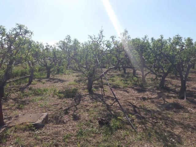 Terreno Agricolo in vendita a Ficarazzi, 9999 locali, prezzo € 28.000 | Cambio Casa.it