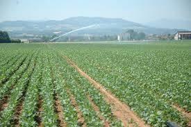 Terreno Agricolo in vendita a Govone, 9999 locali, prezzo € 170.000   CambioCasa.it