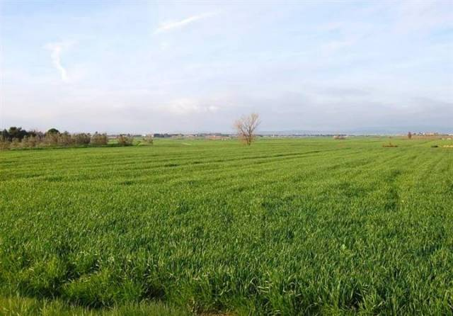 terreno  in Vendita a Altamura