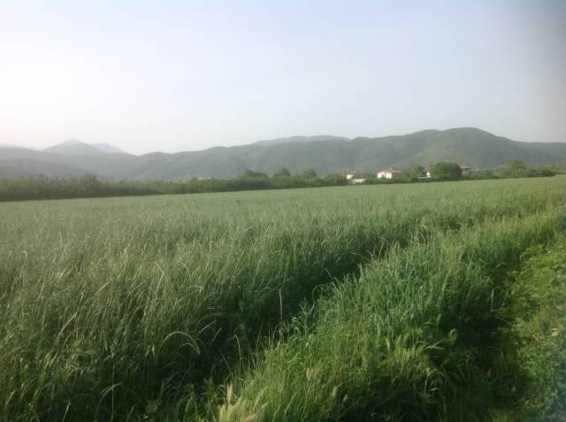 Terreno zona bonifica Venafro Rif. 4272673