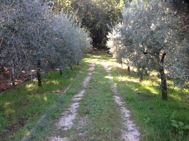 Terreno agricolo in località Asinina Rif. 4272678