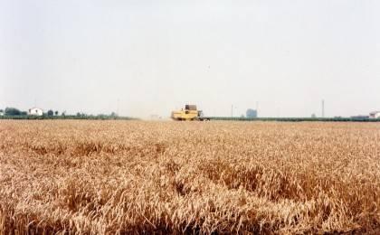 Lendinara - Terreno agricolo di 4,5H Rif. 4415123