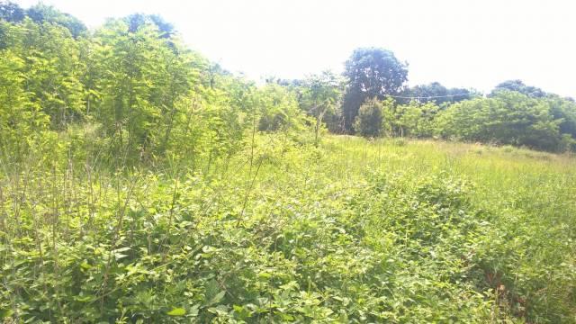 Terreno Agricolo in vendita a Fara Gera d'Adda, 9999 locali, prezzo € 30.000 | CambioCasa.it