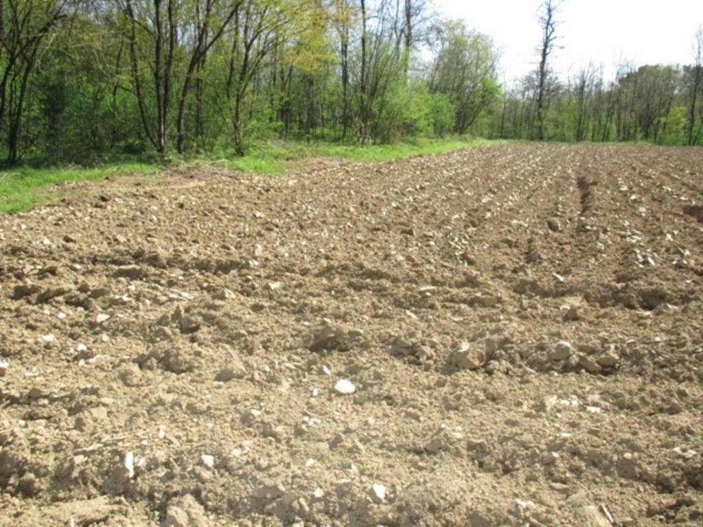 Terreno Agricolo in vendita a Besnate, 9999 locali, prezzo € 25.000 | CambioCasa.it