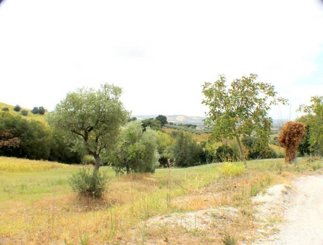 Terreno agricolo di circa 20133mq con diverse piante di uliv