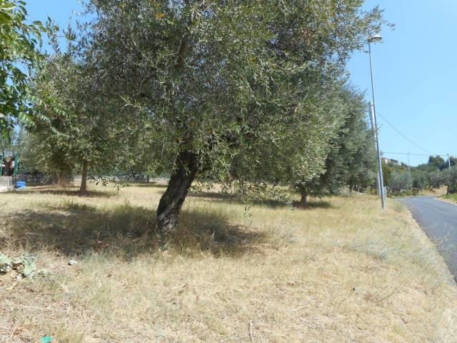 Terreno edificabile in vendita a Colonnella (TE)