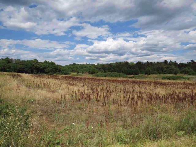 Terreno agricolo seminativo Rif.11239427