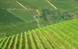 Terreno Agricolo in vendita a Serralunga d'Alba, 9999 locali, Trattative riservate   PortaleAgenzieImmobiliari.it