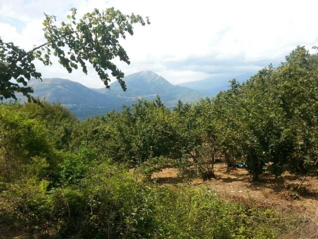 Terreno agricolo in Vendita a Montecorvino Pugliano Rif.12370204