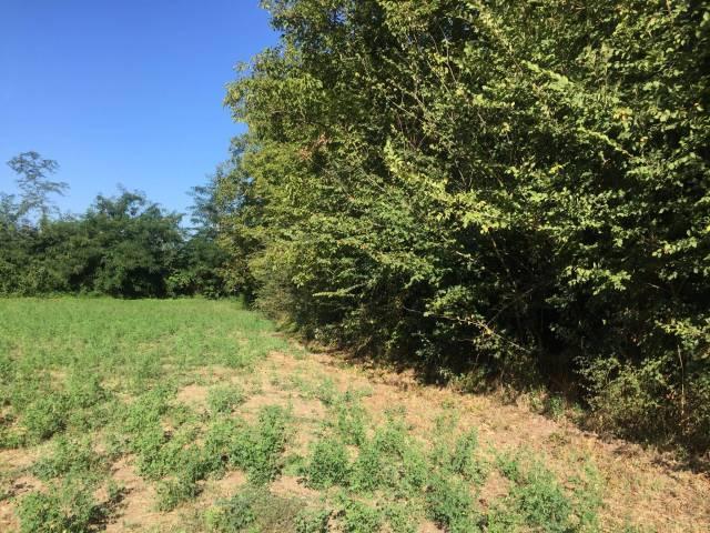 Terreno agricolo in Vendita a Pietramelara Rif.12383026