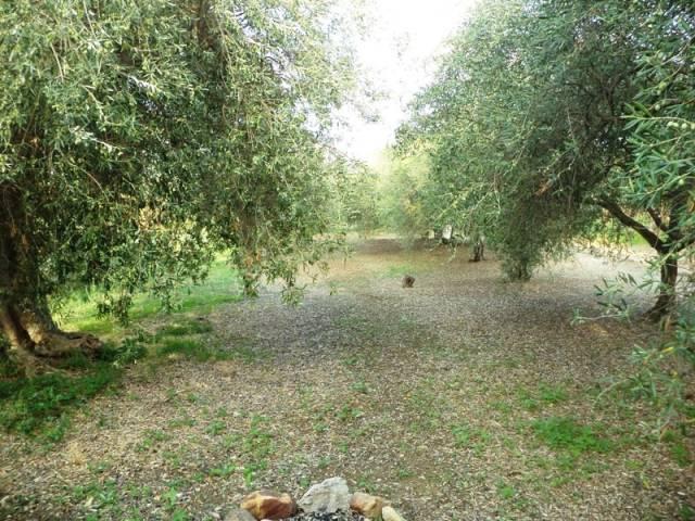 V056 Terreno agricolo pressi Contrada Amalfitano Rif.12389030