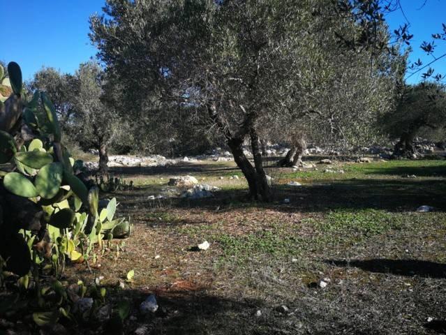 Terreno Agricolo in vendita a Castrignano del Capo, 9999 locali, prezzo € 52.500 | CambioCasa.it