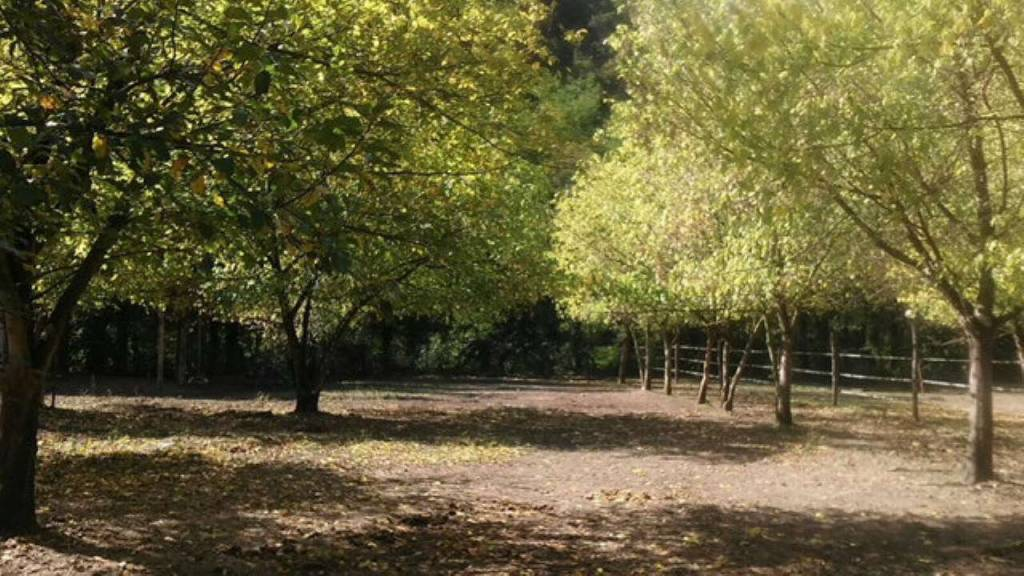 Terreno Edificabile Residenziale in vendita a Sesta Godano, 9999 locali, prezzo € 65.000 | CambioCasa.it