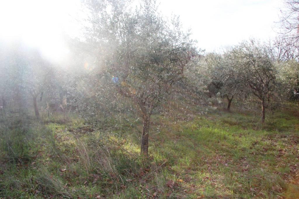 Terreno Agricolo in vendita a Spoleto, 9999 locali, prezzo € 45.000   PortaleAgenzieImmobiliari.it
