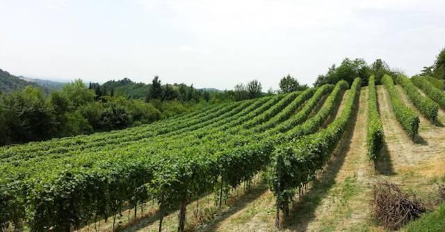 terreno agricolo vendita nizza monferrato di metri quadrati 70000 rif querce e altro