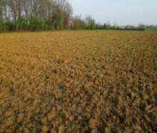 Mesola - Azienda agricola di 16 Ettari Rif.13969386