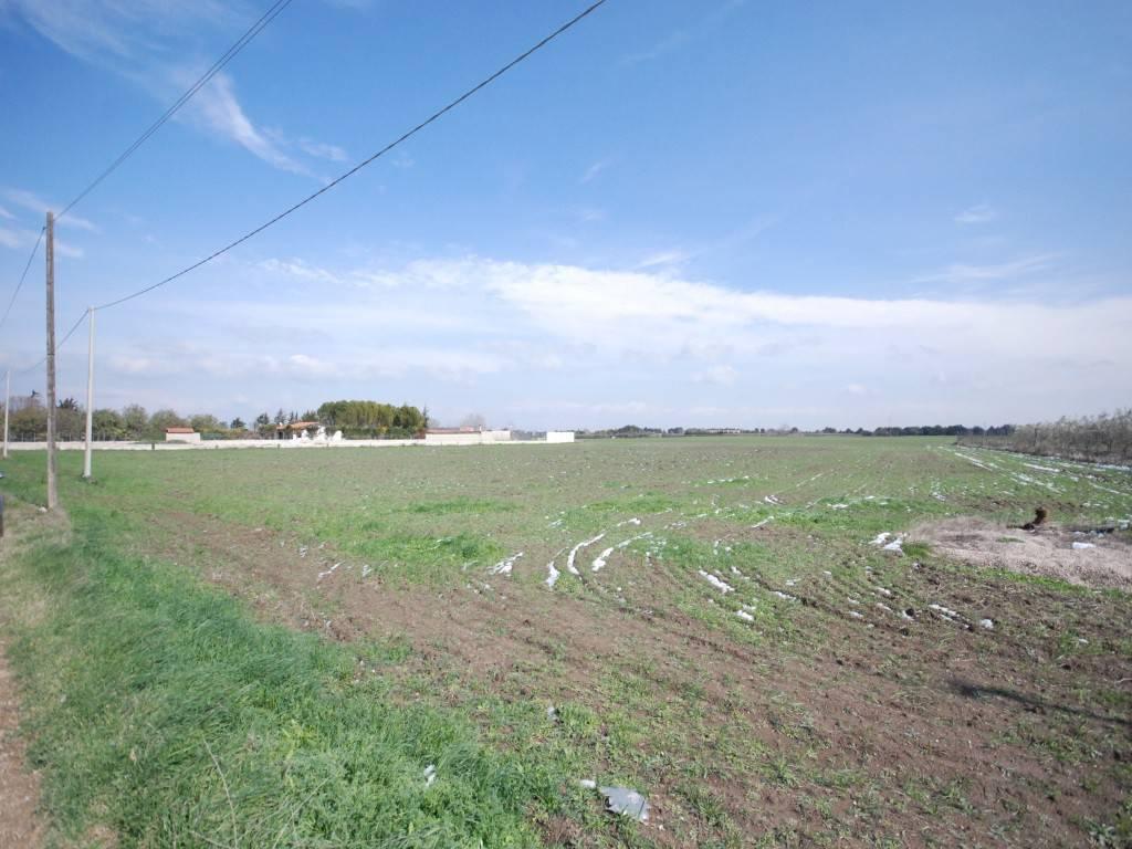 SALICE - TERRENO AGRICOLO Rif. 5588640
