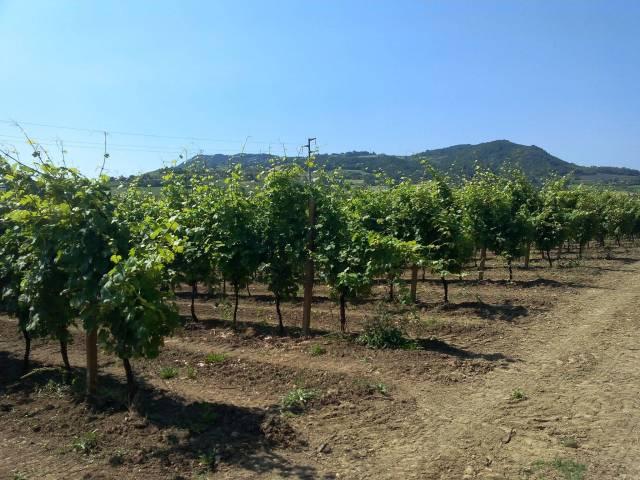 Terreno Agricolo in vendita a Castel Bolognese, 9999 locali, Trattative riservate | CambioCasa.it