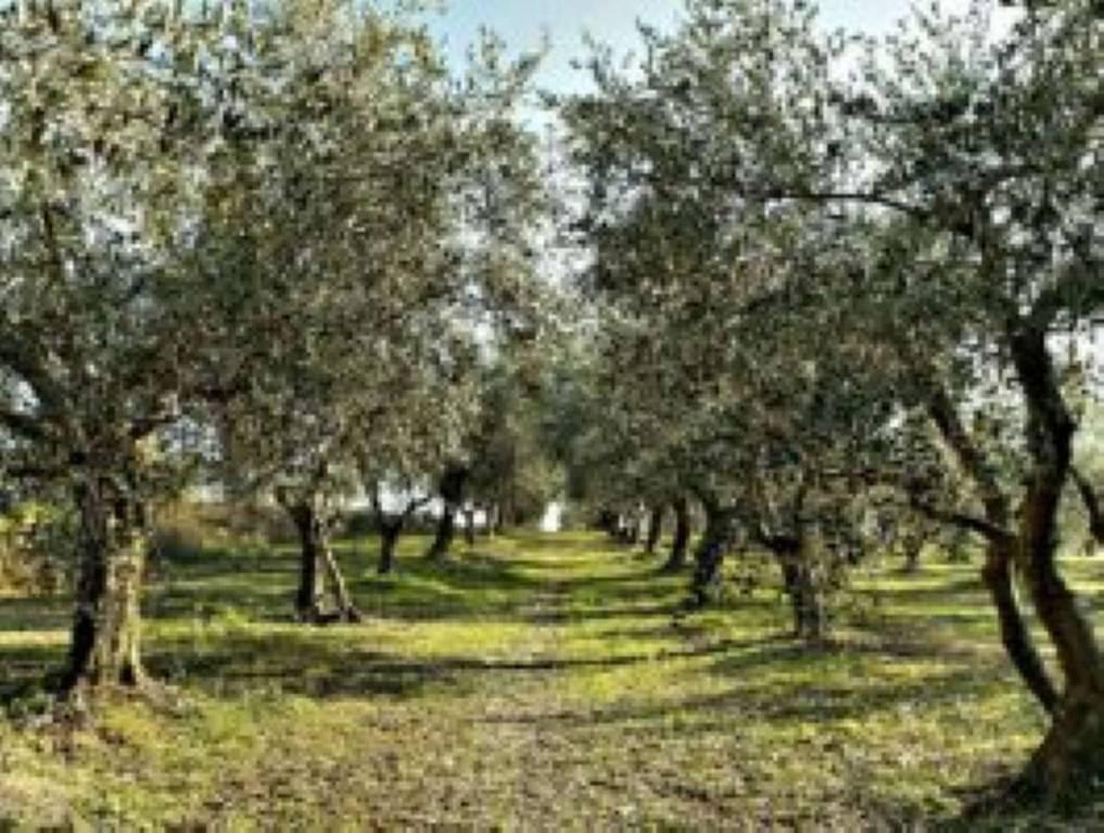 Terreno Agricolo in vendita a Vetralla, 9999 locali, prezzo € 11.000   CambioCasa.it