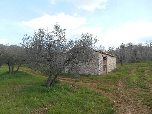 Terreno agricolo in vendita a Montecchio (TR)