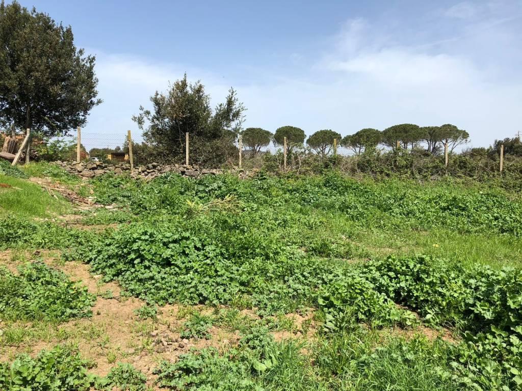 Terreno Edificabile Residenziale in vendita a Anguillara Sabazia, 9999 locali, prezzo € 55.000   CambioCasa.it